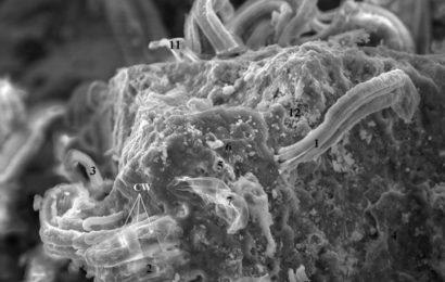 Агентство NASA обнаружило в метеорите внеземные формы жизни