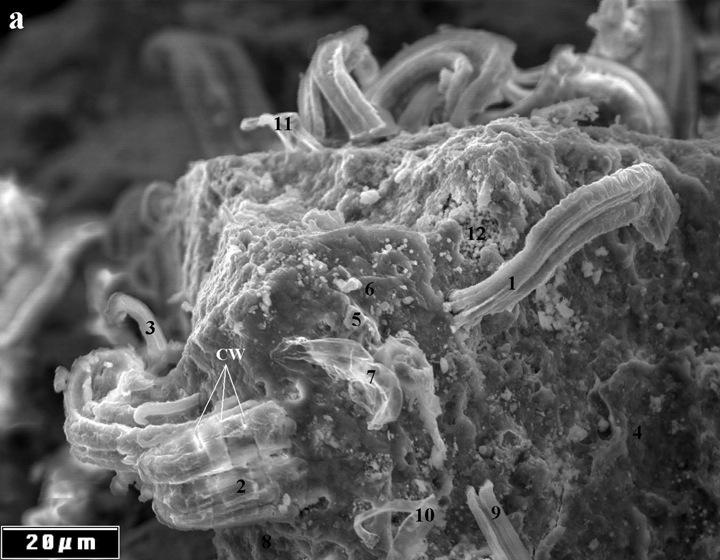 Инопланетные формы жизни на метеорите