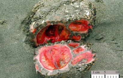 Пьюры — «кровоточащие камни» с морского дна
