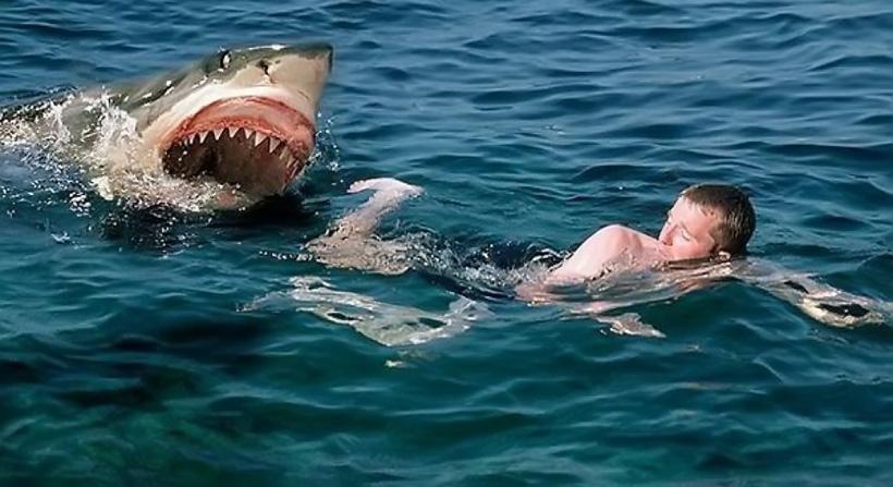 Акула атакует человека
