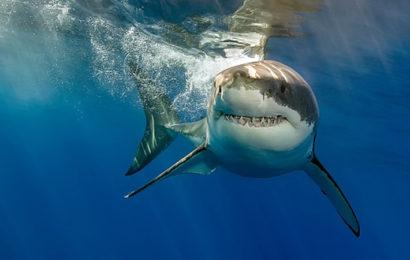 Самые ужасающие нападения акул