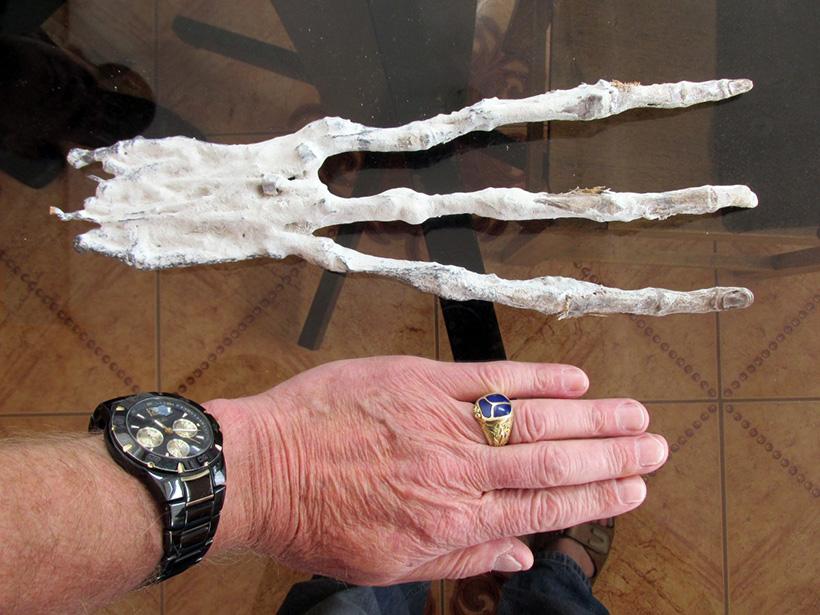 Трёхпалая конечность найдена в Перу