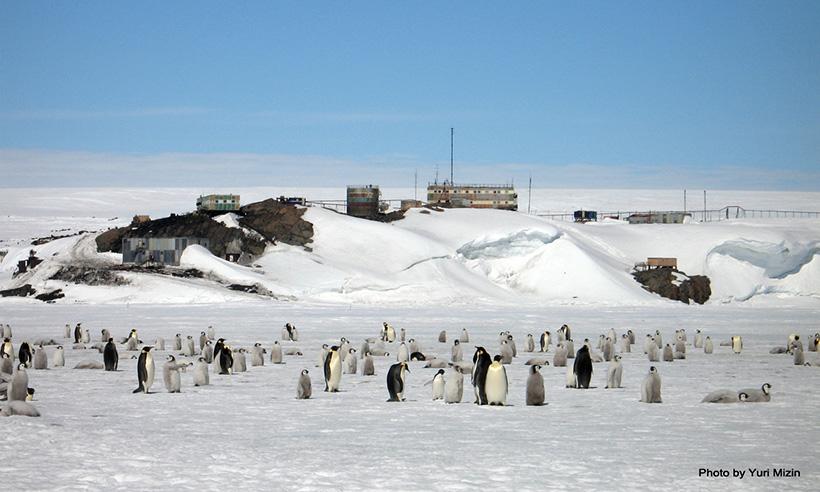 Монстры Антарктиды — плазмозавры