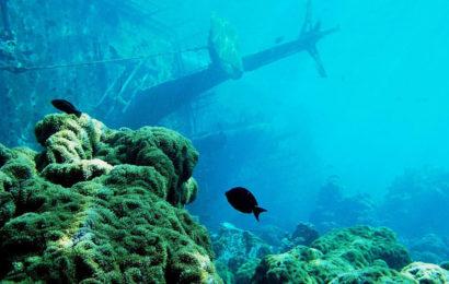 Загадочный остров Пальмира