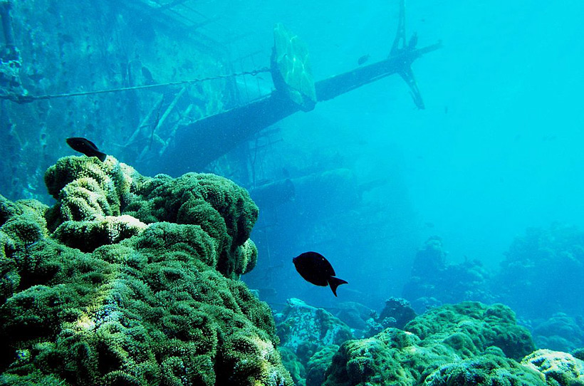 Затонувший корабль возле атолла Пальмира