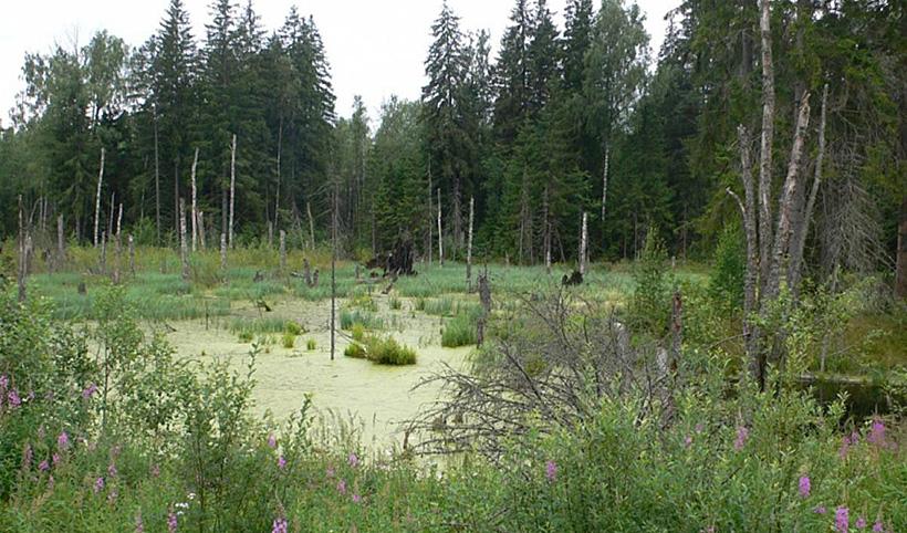 Череповецкое болото