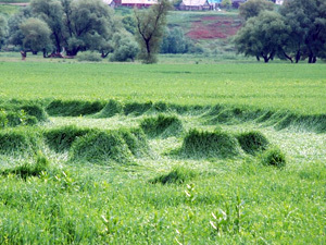 Анализ признаков аутентичности кругов на полях