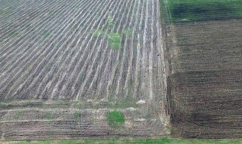 Сенсация: ускоренный рост растений на месте пиктограмм на полях