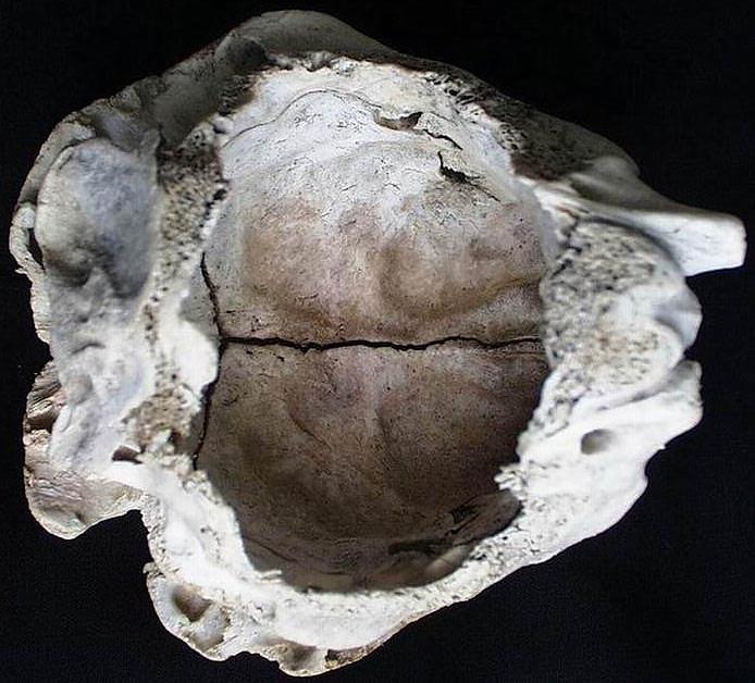 Загадочный череп из Болгарии