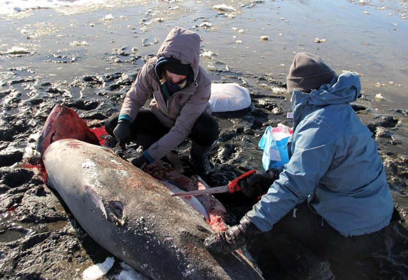 Замерзающие акулы