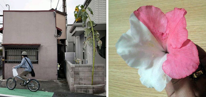 Мутанты в окрестностях Фукусимы
