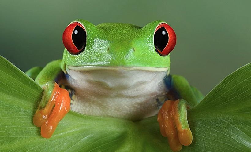 Очки для лягушки