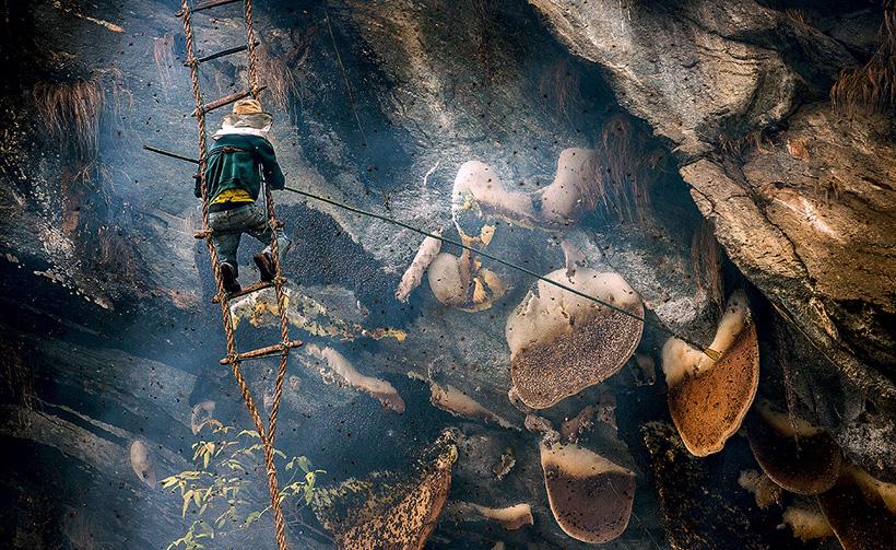 Сбор мёда в Непале