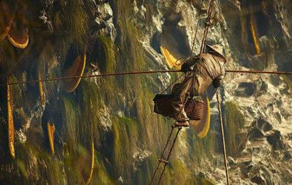 Безумный мёд Непала