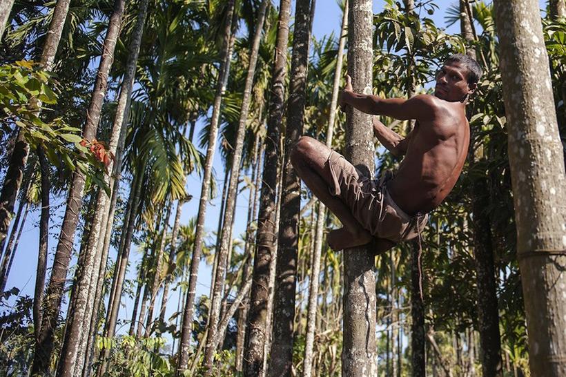 Чандре - мужчина с хвостом