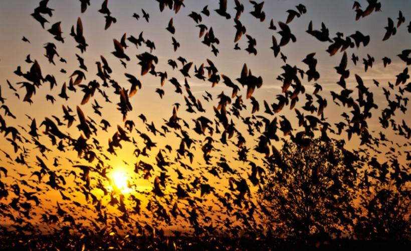 Тайна долины падающих птиц