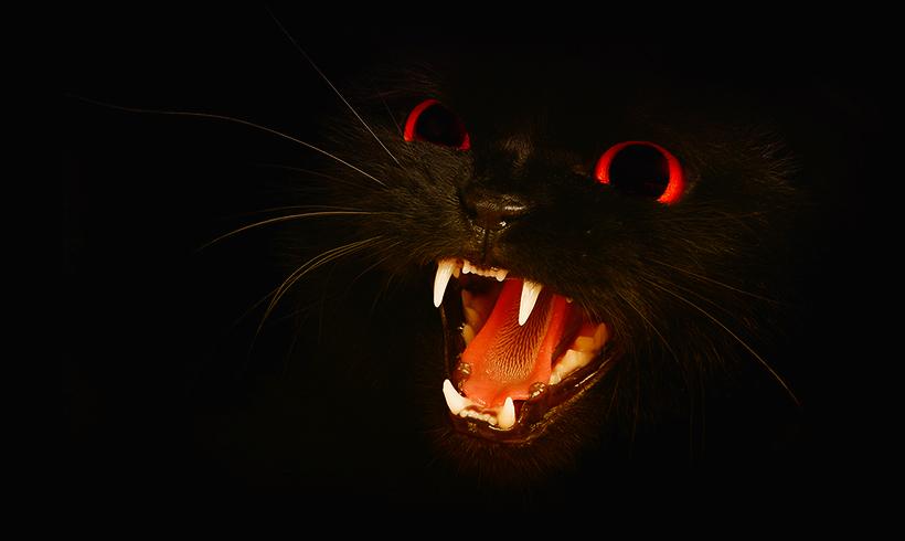 Демонический кот Белого дома