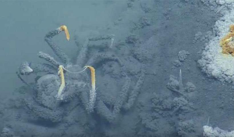 Смертоносное озеро в Мексиканском заливе