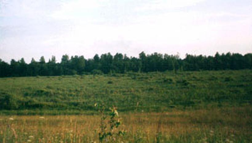 Болотинка у деревни Тишково