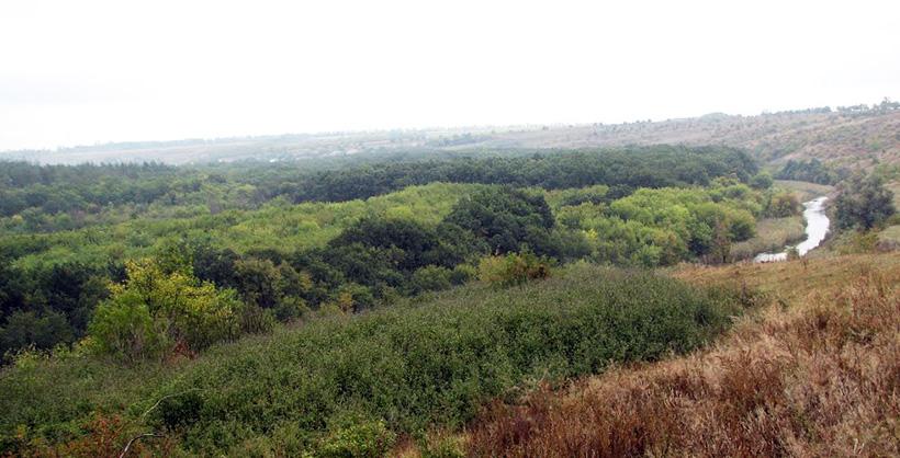 Дибровский лес