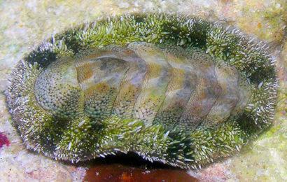 В океане найдено существо с сотней глаз