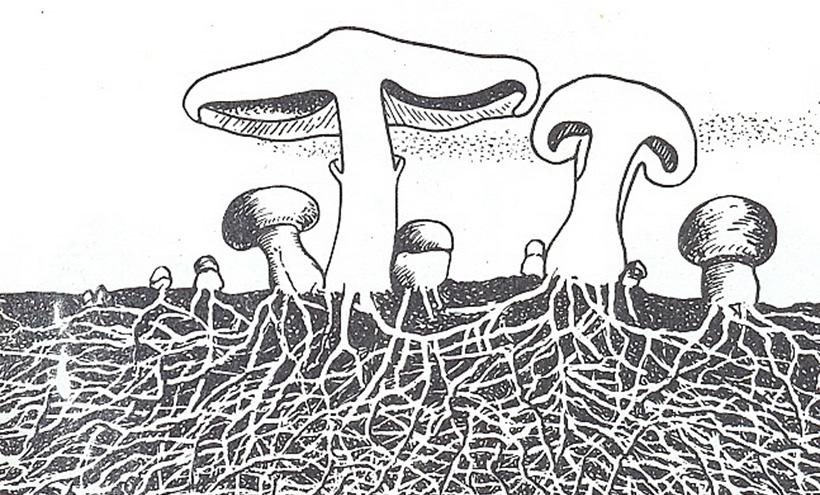 Цивилизация грибов