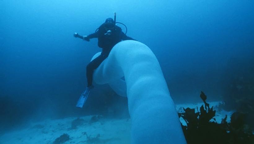 Морской единорог