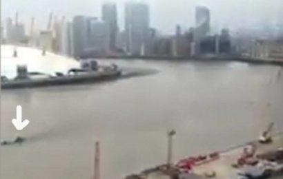 По Темзе плыло какое-то огромное существо и его засняли на видео