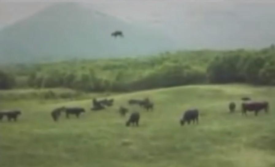 НЛО похищает корову притягивающим лучом в Аргентине