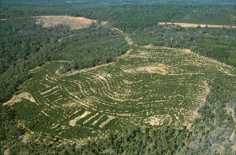 Высаживание деревьев в закрытых карьерах