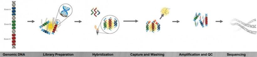 Методика экзомного анализа ДНК человека