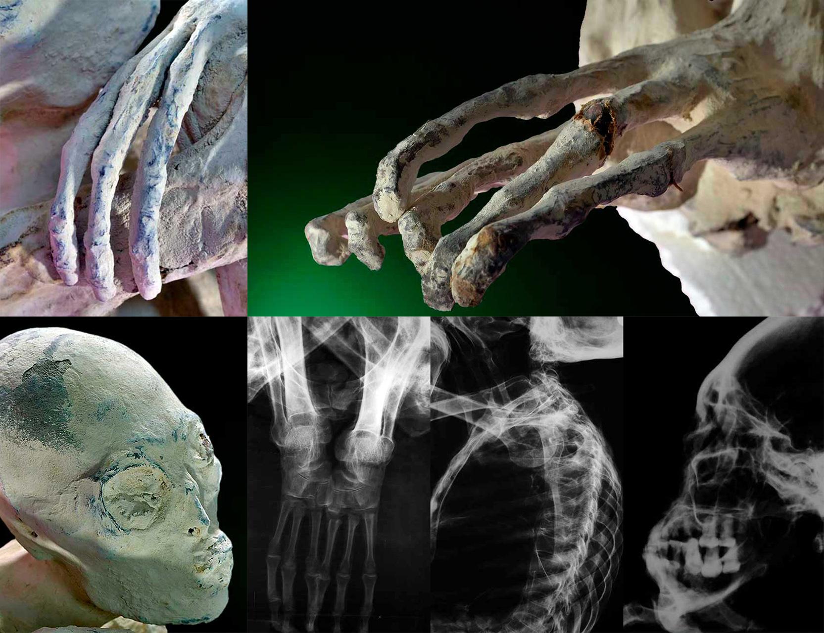 Результаты исследований образцов тканей «Марии» и «Вавиты»