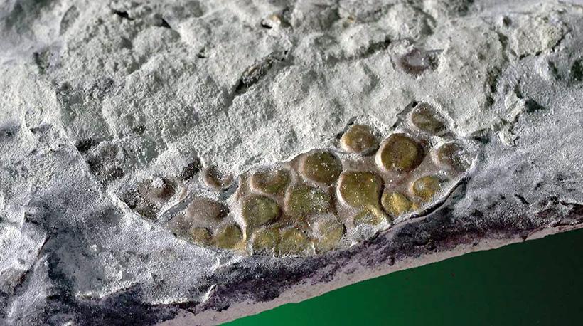 Генетический анализ образцов тканей мумий, найденных в Перу