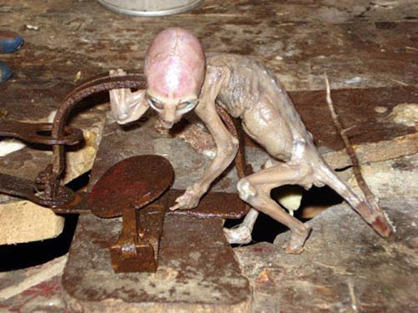 Мексиканский «ребенок-инопланетянин»