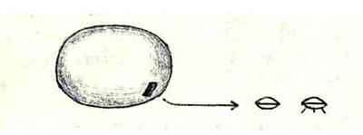 Носитель из системы Альдебаран