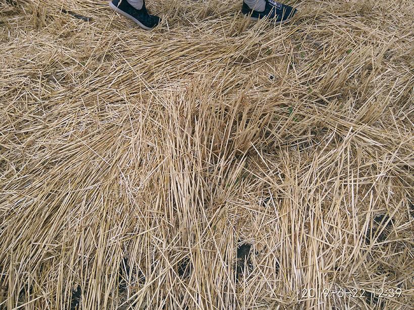 Круги на полях в районе Тихорецка от 19 июня 2019 года