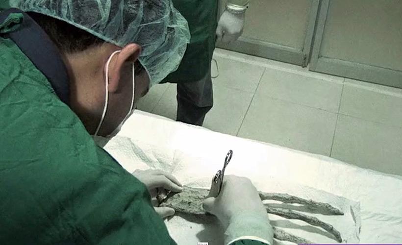 Результаты исследований ДНК тканей «Марии» и «Вавиты»